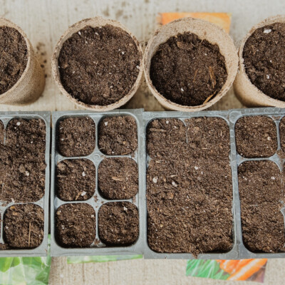vegetable garden on a budget seed starting trays